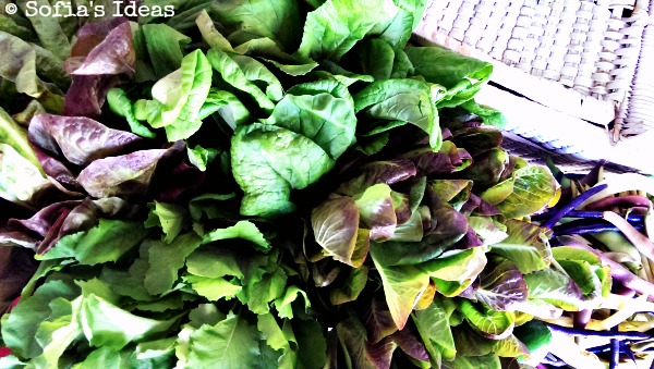 red romaine.chinese spinach.red bibb.young raab.SofiasIdeas